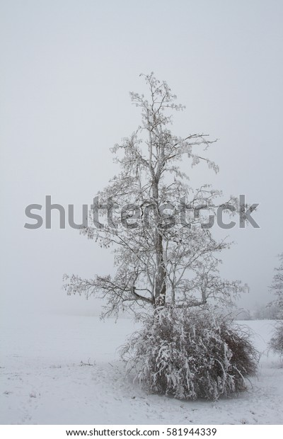 Tree with dog rose in winter.