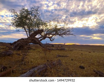 Tree Dry Australian Outback Sunset Clouds Rural Farm Country
