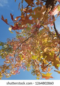 Tree during autumn with ble sky