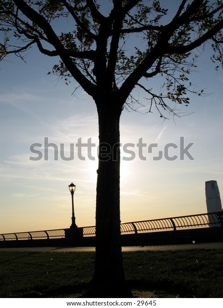 a tree during sunset in Battery Park, NYC