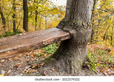 Tree eating bench