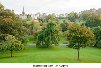 Tree in Edinburgh