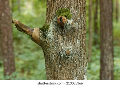 Tree with eyes in the forest