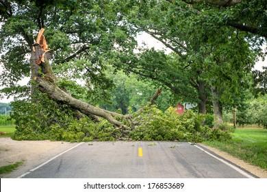 Tree fallen across a road