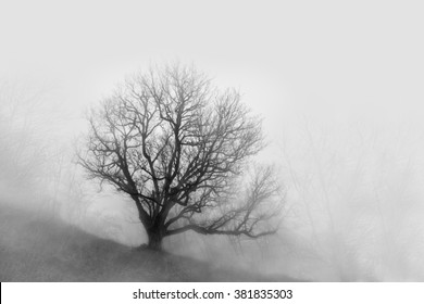 Tree with fallen leaves in the fog. black and white mysterious photography