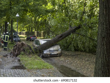 Tree fallen on a car after a storm