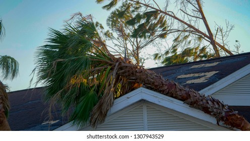 a tree falls in the roof