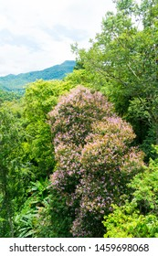 tree features on a mountain, Thailand - Shutterstock ID 1459698068