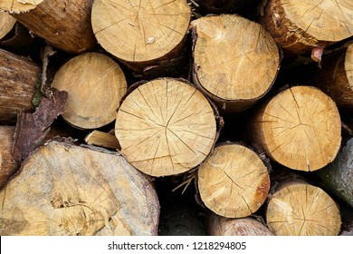 Tree felling. Deforestation. Сut timber logs background. Wood is a renewable source of energy.