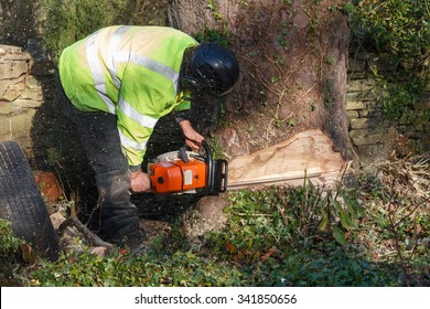 Tree felling with a large chainsaw cutting into tree trunk.  The tree surgeon  doing the tree felling is wearing full chainsaw safety equipment.  Motion bur of sawdust and chippings
