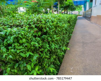 Tree Fence garden
