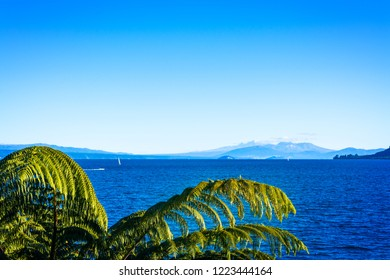 Tree ferns above the water of lake Taupo and volcanic cones of Ruapehu towering over horizon. North Island Volcanic Plateau, New Zealand