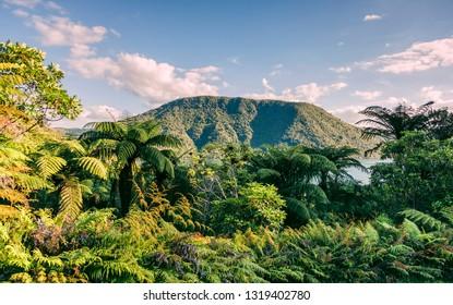 Tree ferns around Blue Lake – Rotorua, Bay of Plenty, North Island, New Zealand