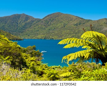Tree ferns and blue water in the Marlborough sounds, New Zealand