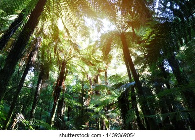 Tree ferns canopy in tropical jungle