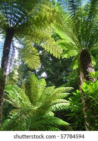 Tree ferns in Park of Pena - romantic garden of the 19th century, Sintra, Portugal