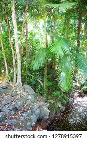 Tree ferns and rocks  in The Daintree rainforest, Tropical North Queensland, Australia