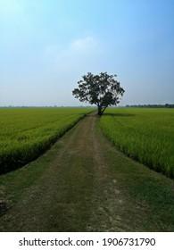 A Tree in the field.