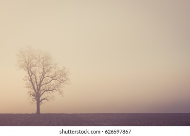 Tree In Field Against A Foggy Sky