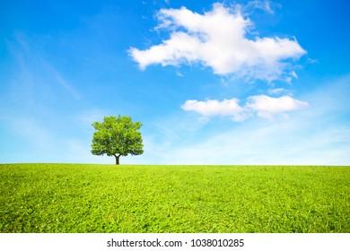 Tree, field and beautiful sky