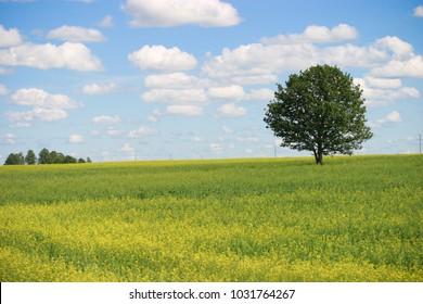 tree in the field, sun, grass, sky