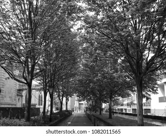 Tree Filled Churchyard Leading to Church