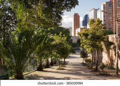 Tree filled street in Bogota, Colombia