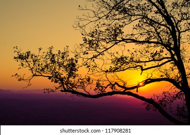 Tree Filled Sunset