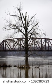 Tree in Flooded River Alt Angle