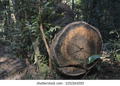 tree, florest, nature