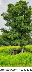Tree and flower in rural.