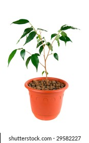Tree at flowerpot isolated on white