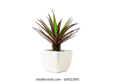 tree in flowerpot isolated white
