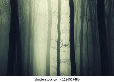 tree in fog in dark woods landscape