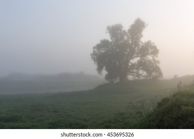 Tree in the fog in the morning. Ivanovo region. Russia.