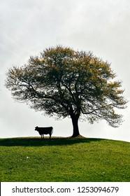 Tree with Fog, Switzerland
