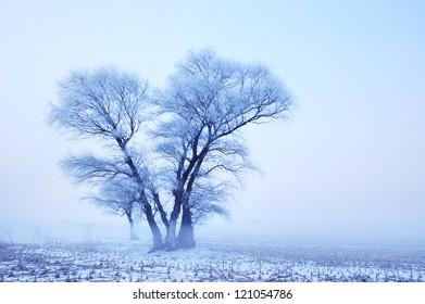 tree in foggy winter