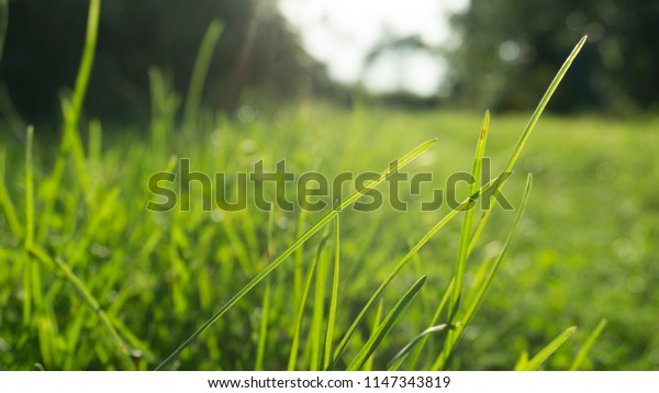 Tree foliage, close-up, sunlight, blur