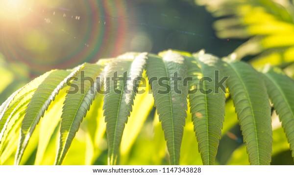 Tree foliage, close-up, sunlight, blur