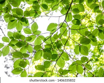 Tree foliage in fresh green spring colors