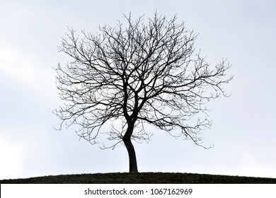 tree foliage without leaves - tree of life