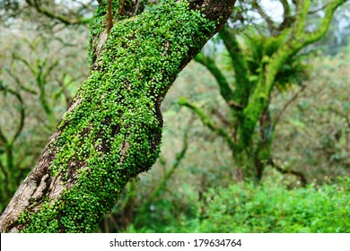 Tree in forest