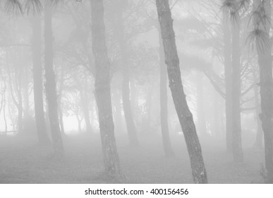 Tree forest abstract fine art blur black and white background texture (Mysterious concept)