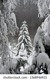 Tree in forest covered by snow