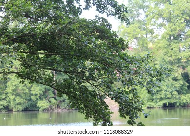 Tree, forest, lake, lamp,nature, trees, wallpaper nature