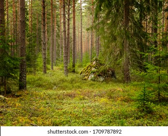 Tree forest landscape. Forest therapy and stress relief. Farnebofjarden national park in Sweden,