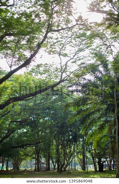 Tree Forest Under Shade Giant Tree Stock Photo Edit Now