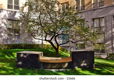 Tree and Fountain near an Hospital. The angle and composition reminds me of a Japanese rock garden. Very Zen.