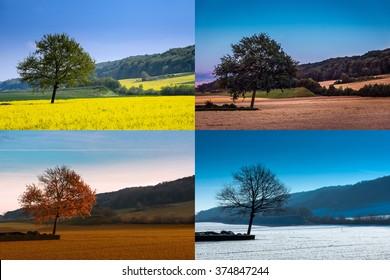 A tree in four seasons