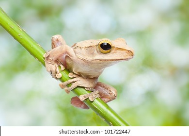 tree frog and natural green background